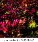 Fall Foliage Fine Art Colorful...