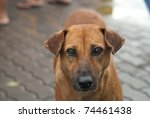 Simple Street Dog In Different...