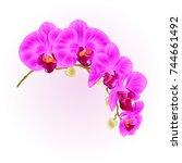 beautiful  phalaenopsis orchid... | Shutterstock .eps vector #744661492