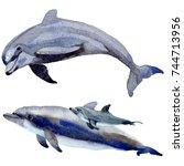 dolphin wild mammals in a...   Shutterstock . vector #744713956