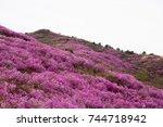 Beautiful Mountain With Azalea...