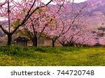 a flowering orchard | Shutterstock . vector #744720748