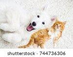 kitten and puppy together lie... | Shutterstock . vector #744736306