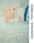 Stock photo little red kitten the kitten lies on the fluffy carpet at home little kitten sleeps close up of 744738652
