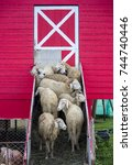 flock of sheep standing at the... | Shutterstock . vector #744740446