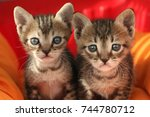sad kittens | Shutterstock . vector #744780712