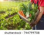 organic vegetables in basket... | Shutterstock . vector #744799708