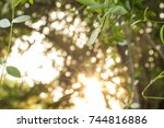 young leaf and green blurred... | Shutterstock . vector #744816886