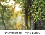 young leaves and tree body of a ... | Shutterstock . vector #744816892
