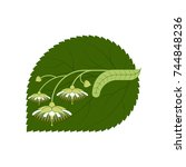 linden flowers. medicinal... | Shutterstock .eps vector #744848236
