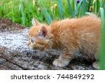 Stock photo red haired kitten on the grass kitten wallpaper striped kitten 744849292