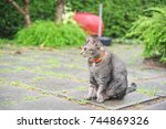 striped purebred cat sitting in ... | Shutterstock . vector #744869326