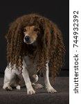 jack russel with wig   Shutterstock . vector #744932392