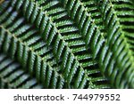An Abstract Of Fern Fronds.
