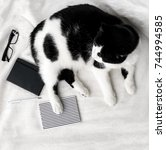 Stock photo black and white cat notebooks pen and eyeglasses on the bed covered with linen sheet 744994585