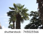 nature palm tree forest  | Shutterstock . vector #745025566
