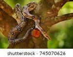 snake on the tree trunk. boa... | Shutterstock . vector #745070626