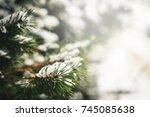 Christmas Evergreen Fir Tree...