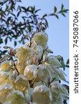 wild flower | Shutterstock . vector #745087066