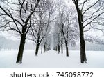 Tree Alignment In Vigeland Par...