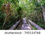 mahogany hammock trail of the... | Shutterstock . vector #745114768
