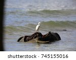 eastern reef heron or pacific... | Shutterstock . vector #745155016