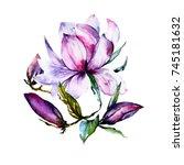 Watercolor Hand Drawn Magnolia...