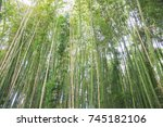 Detail Of A Bamboo Forest....