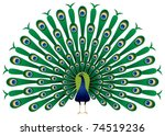 peacock raise his feathers ... | Shutterstock .eps vector #74519236
