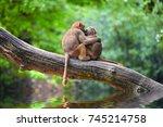 cute monkeys embracing on tree | Shutterstock . vector #745214758