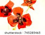 Pretty Red Wild Flowers Poppy...