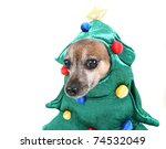 cute chihuahua dressed up in a tree costume - stock photo