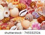 Colorful Seashells As...
