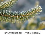 spruce branch covered with... | Shutterstock . vector #745345582