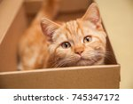 Redhead Kitten Sitting In A Box