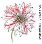 Pink Gerbera Flower Blossom....