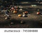 acorn | Shutterstock . vector #745384888