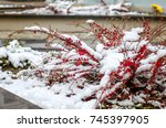 Branches With Red Berries Unde...