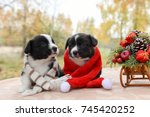 Stock photo funny welsh corgi pembroke puppy in santa hat and new year sled with gifts merry christmas dog 745420252