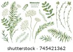 botanical illustrations. floral ... | Shutterstock . vector #745421362