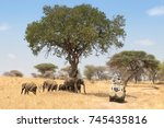 Safari View With Elephant And...