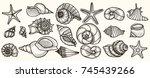 Seashells Vector Set. Hand...