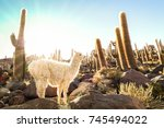 white llama at cactus garden by ... | Shutterstock . vector #745494022