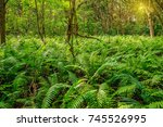 Scenic View Of Rainforest With...