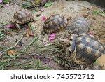 african spurred tortoise at... | Shutterstock . vector #745572712