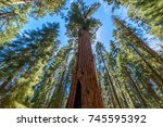 General Sherman Tree   The...