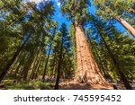 Small photo of General Sherman Tree - the largest tree on Earth, Giant Sequoia Trees in Sequoia National Park, California, USA