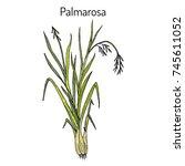palmarosa  cymbopogon martinii  ... | Shutterstock .eps vector #745611052