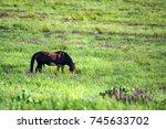 wild stallion grazing on summer ... | Shutterstock . vector #745633702