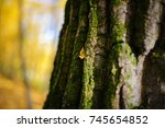 close up an old tree bark with... | Shutterstock . vector #745654852